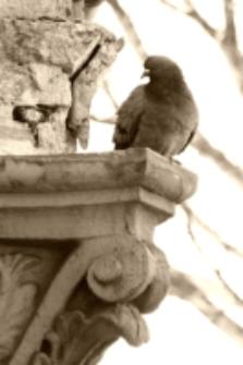 Ptak na gzymsie